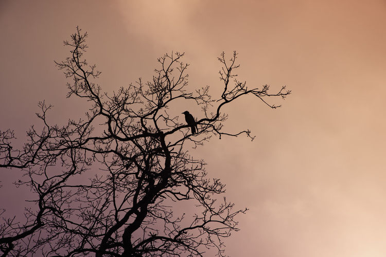 Silhouette of a bird in a tree at sunset Tree Animal Wildlife Bird Animal Themes Animals In The Wild Animal Sky Silhouette Nature Sunset Outdoors Cloud - Sky Bare Tree Branches And Sky Crow