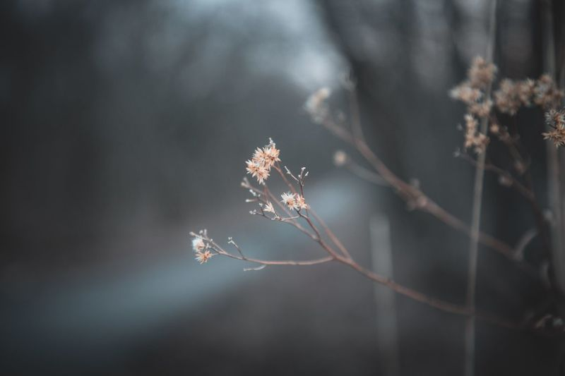 Nature Fragility Focus On Foreground No People Growth Day Tree Beauty In Nature Outdoors Branch Close-up Cold Temperature Winter Frozen Flower Freshness Plant