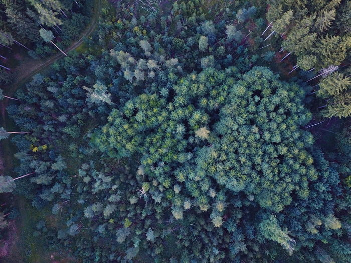 Drone  Backgrounds Beauty In Nature Close-up Day Forest Forest Photography Freshness Germany Green Color Growth Nature No People Outdoors Plant Tree