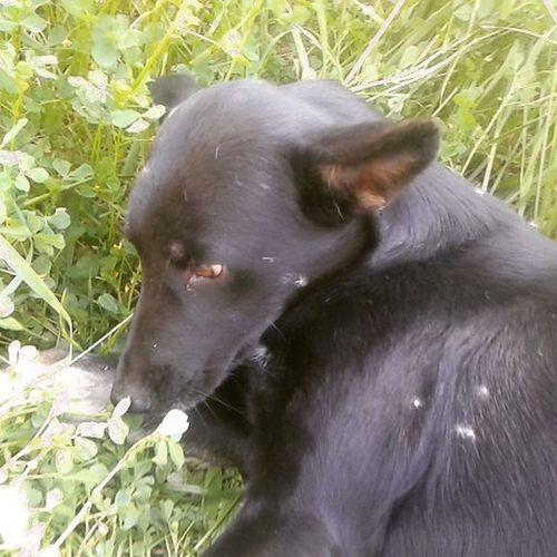 @animalslove365 Arya Pella Pets Pets_of_our_world Animals Negra Mascotas Kiltra Kiltro Perro Dientesdeleon Linda Cute Mascota Florecita Nature Naturaleza Campo @animalelite 💚💚💚💚💚💚💚💚 👍👍👍👍👍 Mas linda mi hija *-* 😚😚
