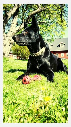 Gråmanns Önzke-Zindra enjoying life. Dogs Enjoying Life Animals
