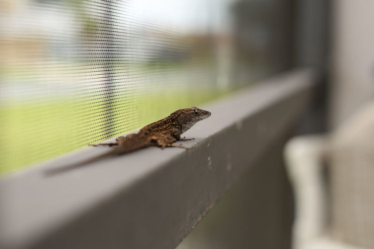 Little reptile