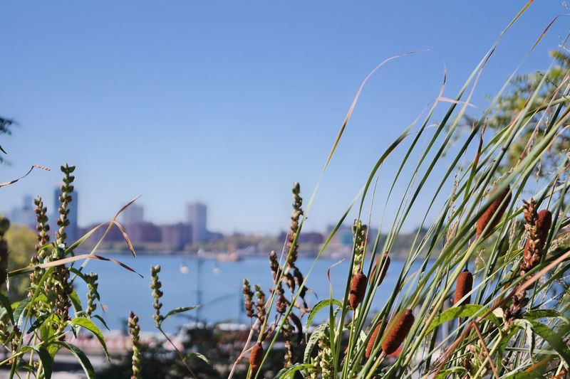 Grass Plant High Line Park Nature Outdoors Beauty In Nature Perspectives On Nature