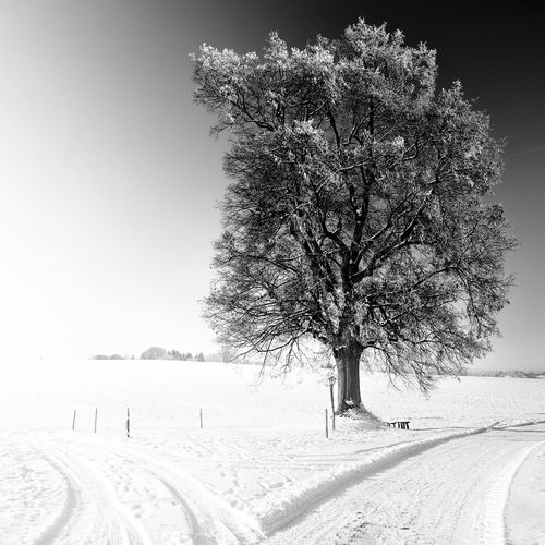 Winter Oak tree in black and white Tree Beauty In Nature Black And White Black And White Photography Black And White Tree Branch Clear Sky Cold Temperature Day Germany Landscape Nature No People Oak Oak Tree Outdoors Scenics Sky Snow Tranquil Scene Tranquility Tree Weather Winter Winter Trees The Creative - 2018 EyeEm Awards