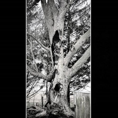 Tree Tree Trees Treebranch Old Farm Farms Iowa Iowafarms Blackandwhite Blackandwhitephotography Blackandwhitephoto Blackandwhitephotographer Clarenceiowa Tiptoniowa Aroundiowa Farmtography FarmPhotography 305photographer Miamiphotographer Miaphotographer Bw_lover Bw Bandw Black White bnw_captures bnw bnw_society