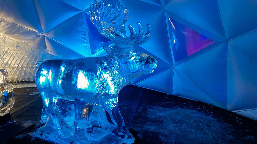 Reindeer ice sculpture at the christmas city of Arezzo Reindeer Aniamls Sculpture Christmas Xmas Blue Ice Sculpture Card Tuscany Tuscany Italy Merry Christmas! Nightlife Illuminated Indoors  Cold Temperature Night Lighting Equipment Ice Transparent Glass Frozen Close-up Glowing Decoration Crystal Arts Culture And Entertainment Light No People