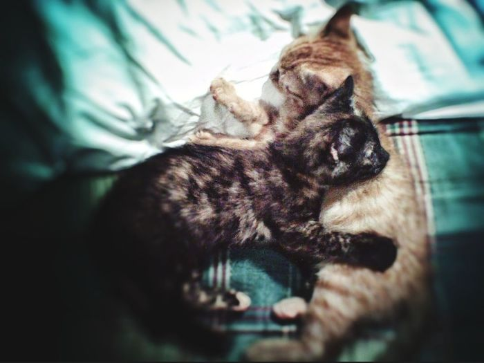 Kittens Brother & Sister Cute Pets I Miei Gattini ... Gattini True Love Abbraccio Hug