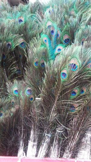 Backgrounds Full Frame Multi Colored Close-up No People Abstract Textured  Day Outdoors Nature Feather Design Peacock Feather Animal Themes Peacock Fanned Out Beauty In Nature Nature Pattern Feather  Blue Peacock Feather Design Fragility