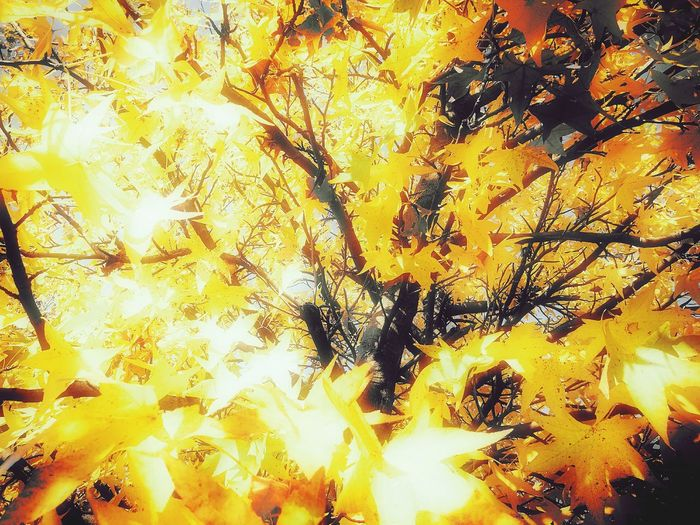 Sunny autumn... Backgrounds No People Close-up Full Frame Yellow Beauty In Nature Nature Autumn Colors November 2016 Cellphone Photography Color Madness Autumn Leaves Beauty In Nature Week On Eyeem Autumn 2016 Nature Tree Low Angle View Branch Peaceful Showcase: November Leaves Leaves🌿 Leaves_collection Yellow Leaves