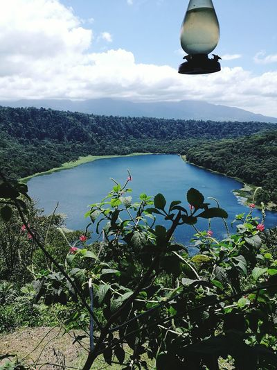 Travel Destinations Beauty In Nature No People Nature Day Lake Beauty Landscape Nature Reserve Costa Rica Y Su Naturaleza Plant