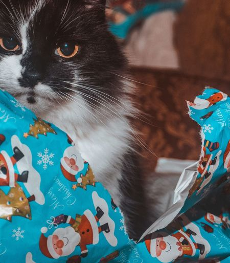 Unimpressed with Christmas Wrapping Paper Christmas Present EyeEm Selects Pets Domestic Cat Domestic Animals Animal Themes One Animal Mammal Feline Indoors  No People Portrait Looking At Camera Sitting Close-up Day