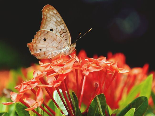 Nature_collection Flowers,Plants & Garden Enjoying The Sun Butterfly