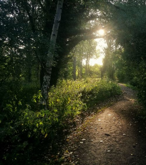 Landscape Landscape_Collection HuaweiP9 Huaweiphotography Smartphonephotography Countryside Path Woods Forest Forest Photography Low Light Photography Lowlightphotography Tree Water Shadow Sunlight