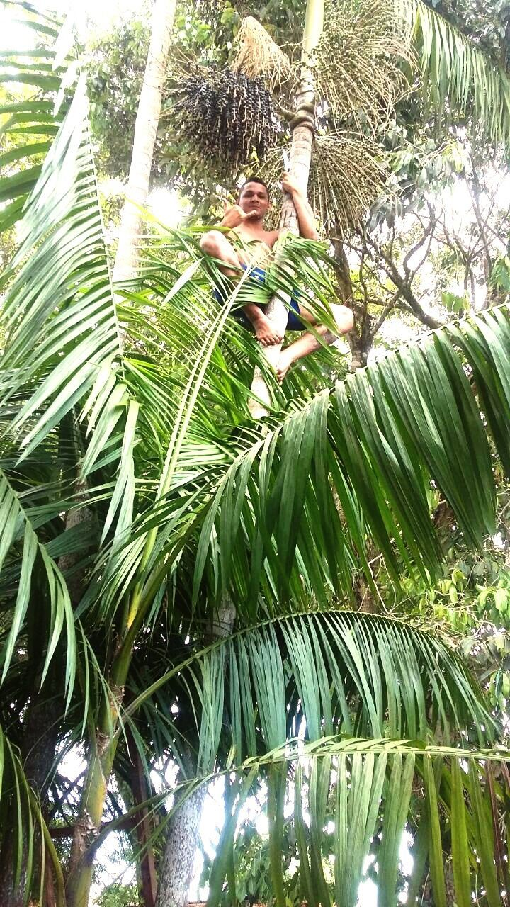 tree, day, leaf, outdoors, full length, nature, growth, one person, palm tree, people