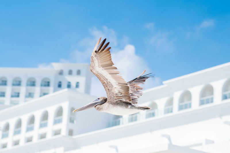 Flying Pelican Animal Themes Beach Life Bird Photography Feathers Fly Flying Bird Fujifilm FUJIFILM X-T2 Fujifilm_xseries Pelican Wings