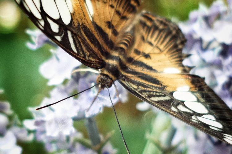 Niklas Storm Juni 2018 Perching Flower Butterfly - Insect Insect Close-up Animal Themes Butterfly Antenna Animal Wing Animal Antenna Animal Markings Spread Wings My Best Photo