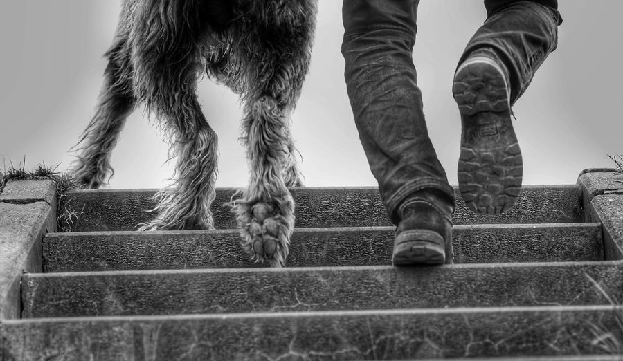 Paws And Feet Human Body Part Day Low Section Dog Part Have A Nice Day♥ Animal Themes Dog Lovers🐾 Irish Wolfhound Gentle Giant Willi The Wolfhound Mommys Boy❤ Dogslife Domestic Animals Outdoors Stairs Up Happiness ♡ Togetherness Black & White Blackandwhite Photography Long Goodbye