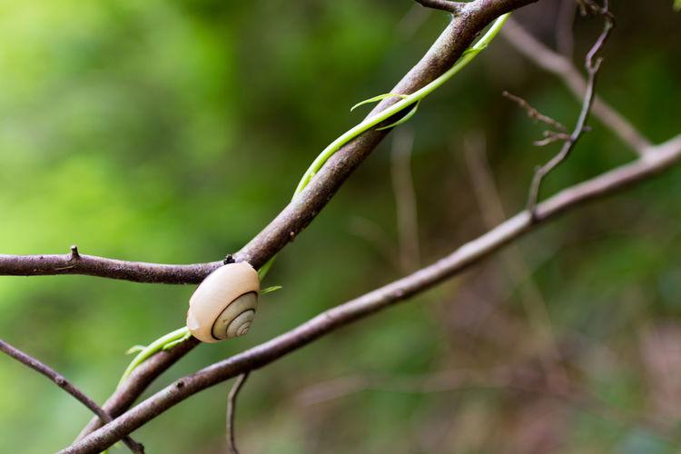 Snail Beauty In