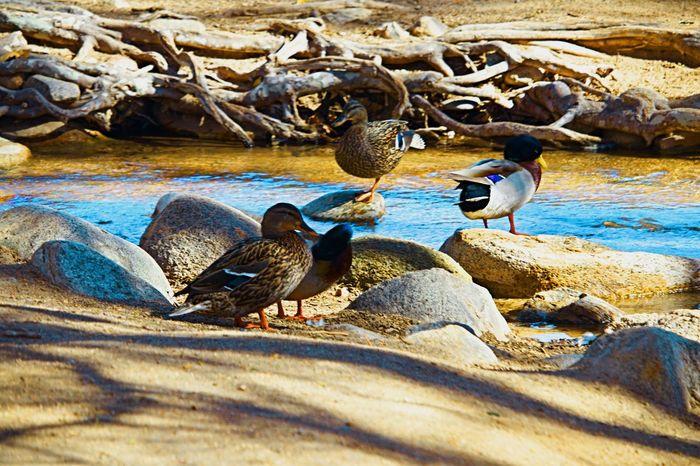 Bird Animals In The Wild Animal Wildlife Animal Themes No People Nature Outdoors