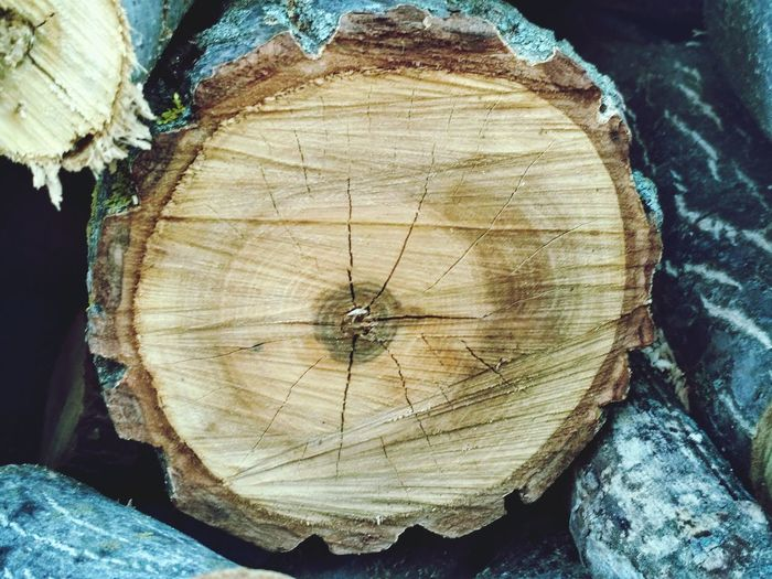 Wood - Material Tree Ring Log Lumber Industry Tree Stump Textured  Deforestation Timber Tree Close-up Cross Section No People Environmental Issues Nature Backgrounds Outdoors Day