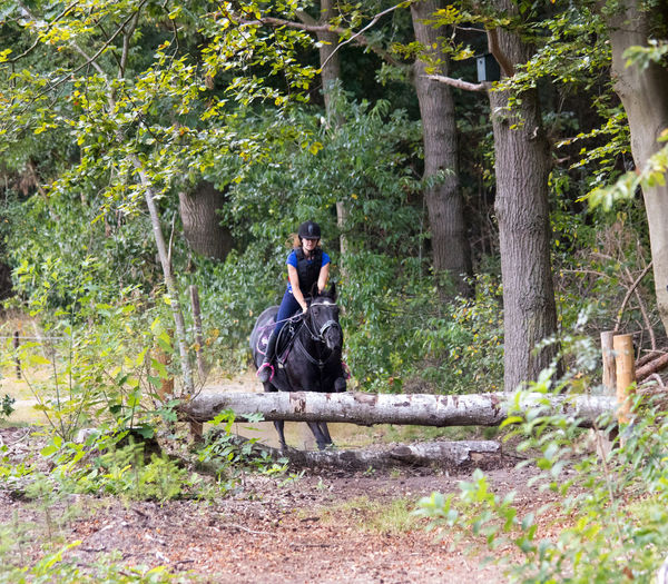 Woman Riding Horse Jumping Over Obstacle On Field At Forest
