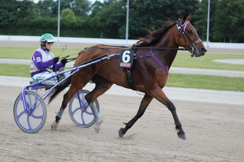 Jockey Pferde Pferderennbahn Pferderennen Pferdewetten Horses Horseback Riding Riding Sports Race Sport Animal