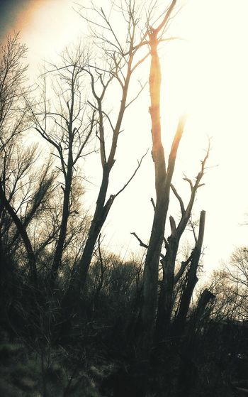 Some Old dead Trees that were kind of Creepy. Dark Spooky Nature Earth Wilderness Outdoors Tree Wood Forest