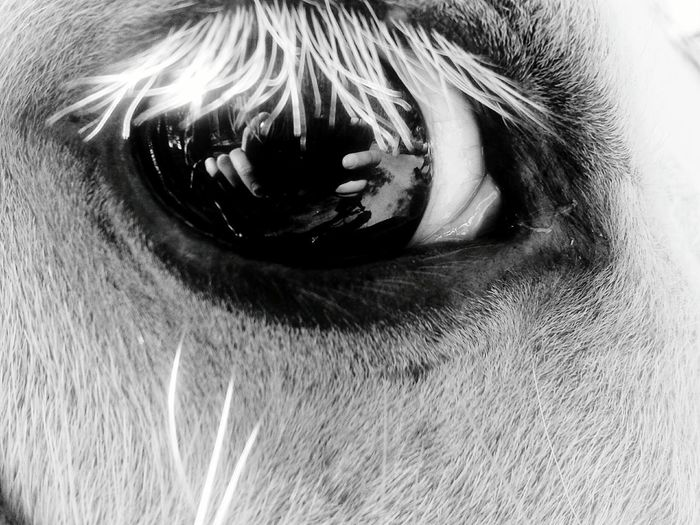 Horse First Eyeem Photo