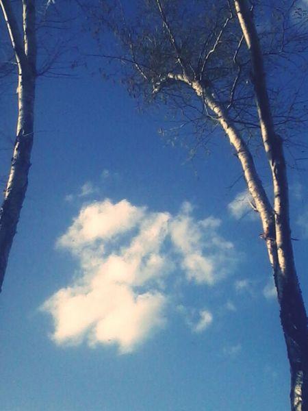 Wen I Close My Eyes I see Tree's + Sky = Peace. Quando EU abrir Meuse olhos árvore + Céu = Paz. Cuando abroad Los phosphate veo árbol + Cielo = Paz