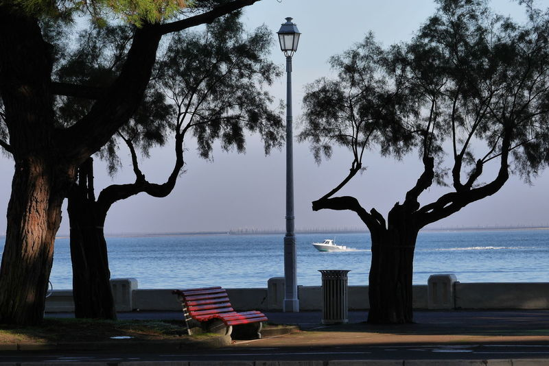 Arcachon Tree Sea Beach Sky Water Nature Branch Vacations Outdoors No People Sunset Landscape Scenics Natural Parkland Horizon Over Water Sea And Sky Seafront Sea Front Bassin D Arcachon Seascape Nofilter The Purist (no Edit, No Filter) No Filter Nature The Street Photographer - 2017 EyeEm Awards