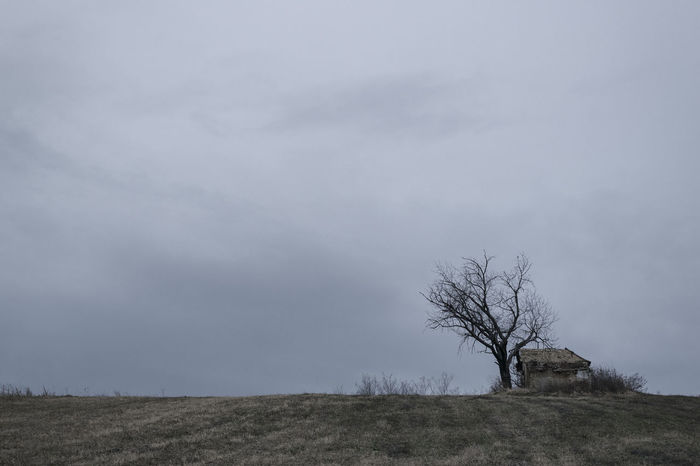 Old abandoned house at the hill, overcast windy weather Abandoned Places Fieldscape Old House . Architecture . Rotting Away Spooky Trees Bare Tree Beauty In Nature Day Hill Country Hunted House Isolated House Landscape Lone Nature No People Old Abandoned Structures Outdoors Overcast But Beautiful Scenics Single Tree Landscape Sky Tranquility Tree Windyweather