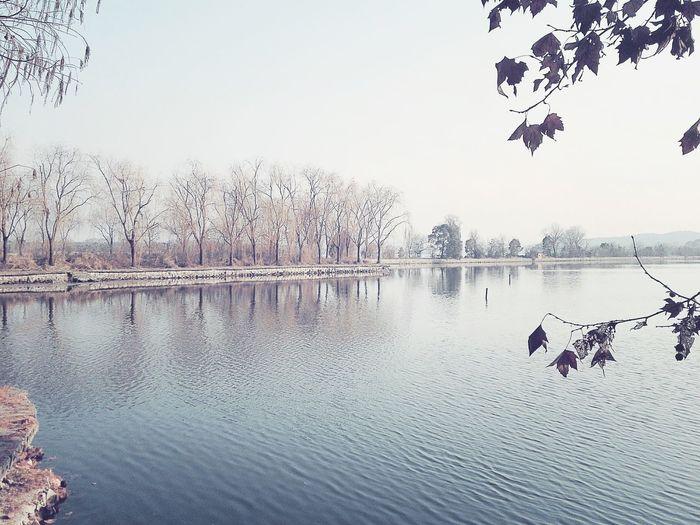 Winter Lake Tree