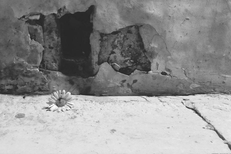 More on https://www.facebook.com/leccecomelacantoio/ Black & White Bnwmood Bnw Photography Black And White Blackandwhitephotos Blackandwhitephotography Blackandwhite Bnw_captures Blackandwhite Photography Bnw_collection Bnwphotography Blackandwhitephoto Lecce (Italia) Lecce B/w Lecce Lecce - Italia Lecce City Flower Flower Collection Flower Photography Leccecomelacantoio Bnw Bnw_life No People Flowe