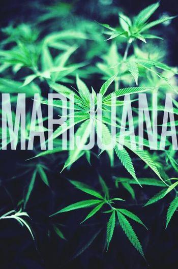 Cannabis Marijuana Art & Marijuana Weed