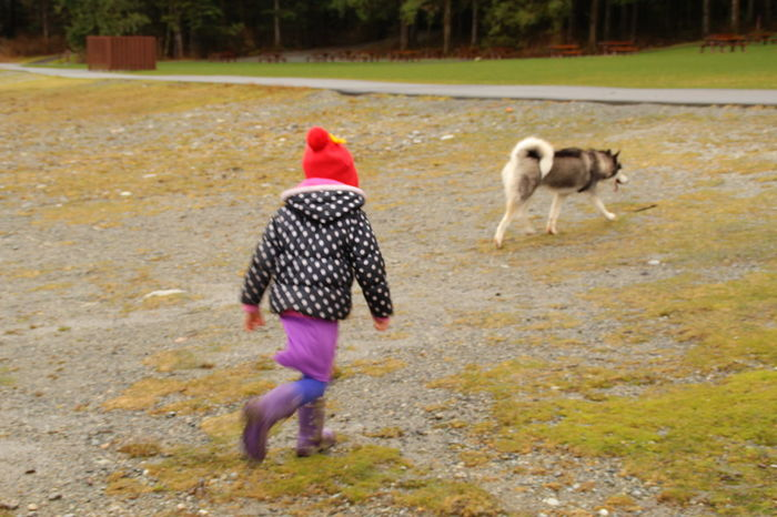 a little girl is following a dog in the park. Casual Clothing Dog Love Followme Girl Little Girl Malamute No Focus Outdoors Running The Following