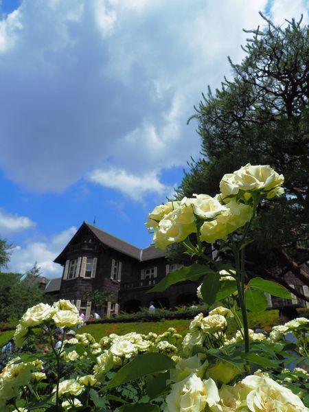 いい天気🌤🌹 Flower Roses🌹 Fragility Plant Cloud - Sky Day Low Angle View Built Structure Petal Freshness Outdoors Flower Head Building Exterior Garden Garden Photography Japan Photography Olympus OM-D E-M5 Mk.II