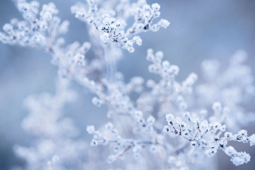 Branches covered with frost Beauty In Nature Branches Close-up Cold Temperature Fragility Frosty Landscape Nature Outdoors Selective Focus Snow Snowflake Sparkling Winter