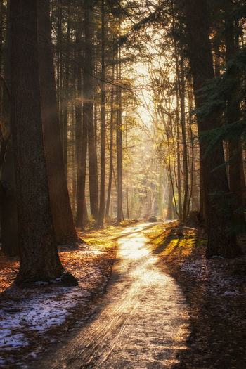 Autumn Beauty In Nature Environment Fog Forest High Key Photography Holland Landscape Nature Netherlands Netherlands Nature No People Outdoors Scenics Snow Sunlight Tranquil Scene Tree Tree Trunk Trees Treescollection