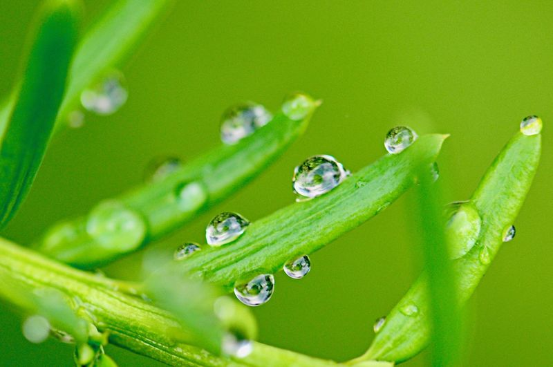 Drop Green Color Water Wet Close-up Plant Growth Nature Beauty In Nature No People Freshness Selective Focus Leaf Plant Part Day Purity Dew Vulnerability  Blade Of Grass Outdoors Rain RainDrop Rainy Season