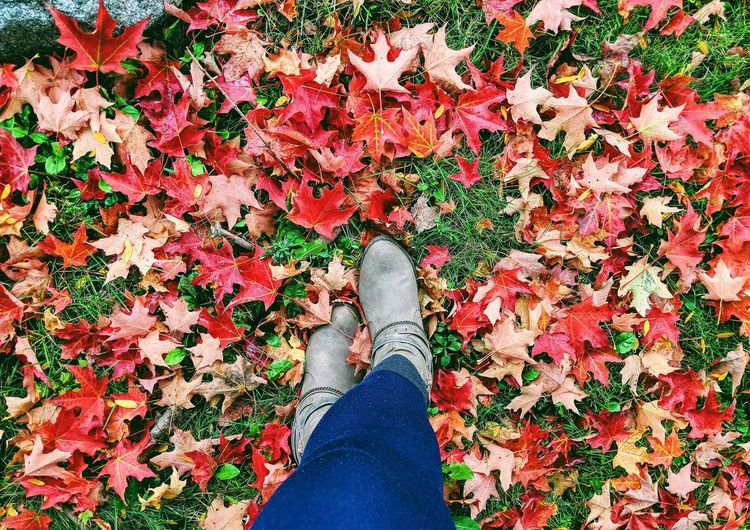 Low Section Of Woman Wearing Shoes Standing On Autumn Leaves