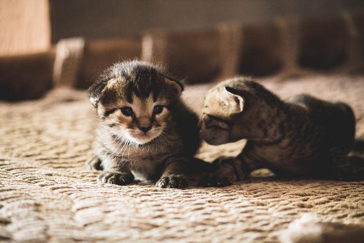 Close-up Cat Family Undomesticated Cat Feline Big Cat Cat Domestic Cat Kitten Stray Animal Tabby Carnivora