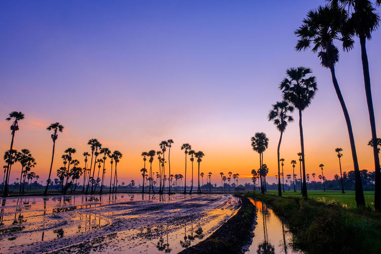 Silhouette palm trees by road against sky during sunset