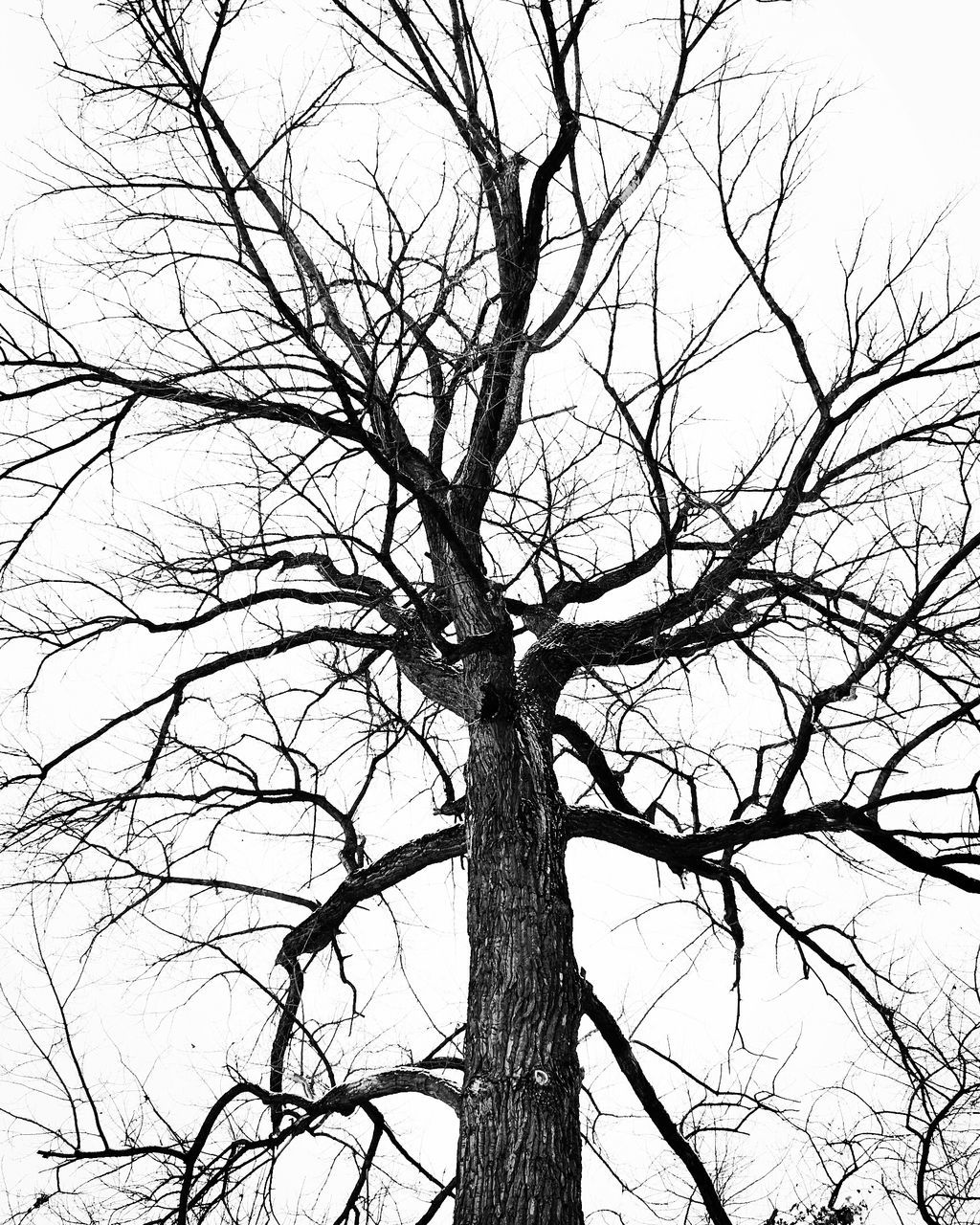 tree, bare tree, branch, sky, low angle view, plant, trunk, tree trunk, no people, tranquility, nature, scenics - nature, day, outdoors, clear sky, beauty in nature, land, dead plant, winter, single tree