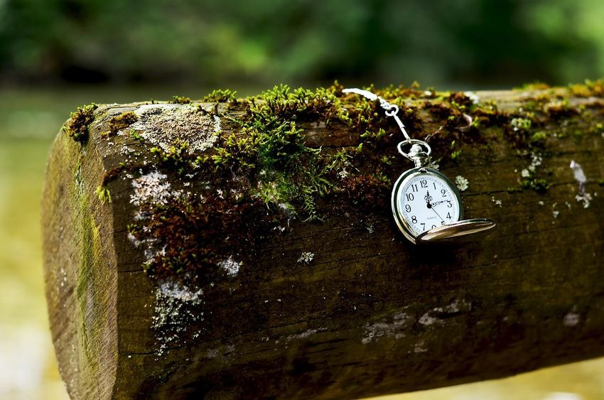 Clock Pocket Watch Watch Wood Nature Nature Photography Moos Silber Oldschool No Filter