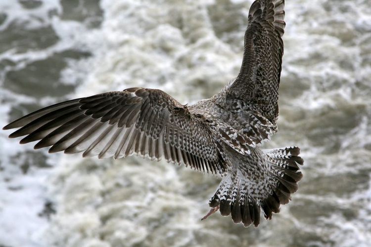 Sheveningen Nature Birds Fly Birdy Fly Mypictures