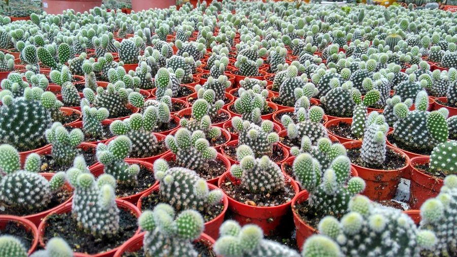 Malaysianphotographer Malaysia Truly Asia Cameronhighlands Green Color Cactus Cactusvalleysdnbhd