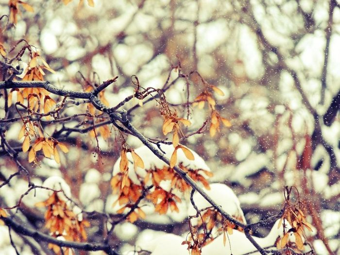 Branch Nature Outdoors Snow Spring Tree Yellow