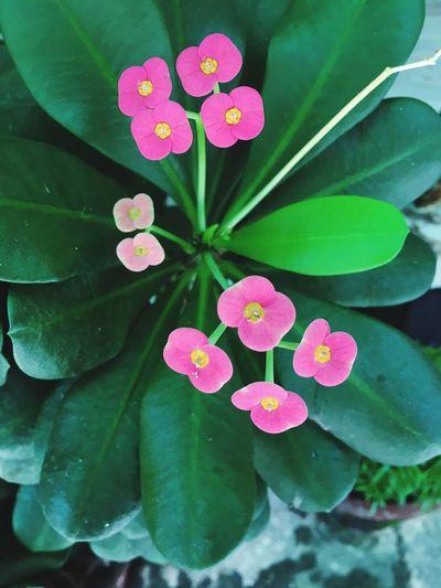 Unknown Plant to me Homegarden Flowerporn