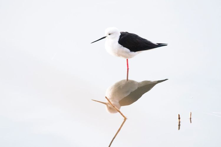 Bird Animals In The Wild Animal Themes No People Animal Wildlife Day Nature Stork Outdoors White Background