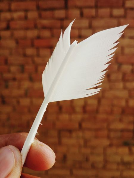 Beautiful Feathers Close-up Fragility Human Hand Background Brick Background Feather Of A Bird Feather Of Love And Creativity EyeEmNewHere Feathers, Soft, Contrast, Light, Delicate, Fragile, Light And Dark Day White White Feather Sommergefühle